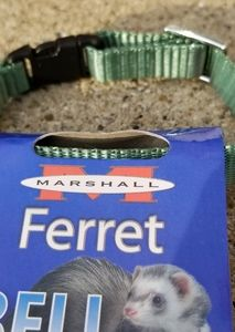 Ferret collar with bell
